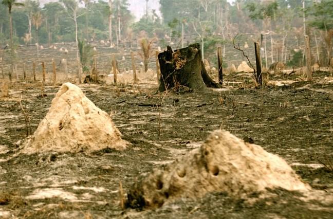 Foto mostra área com árvores queimadas na Amazônia