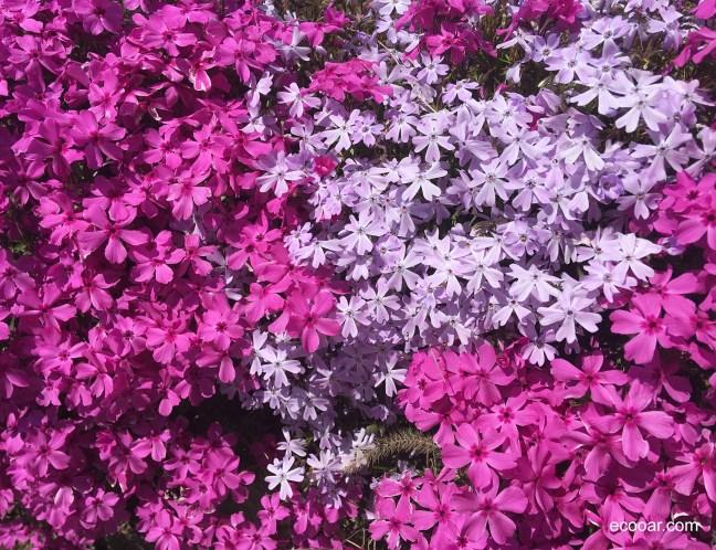Foto mostra jardim com flores em Portland, Connecticut