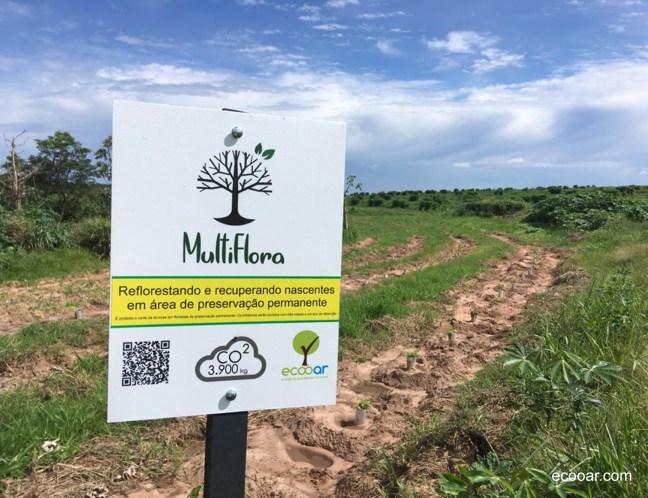 Foto mostra área de reflorestamento com árvores plantadas, com pés de café ao fundo na natureza