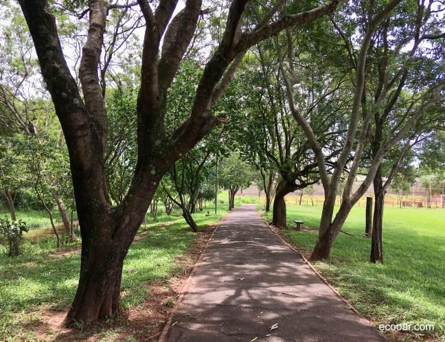 Foto mostra bosque com árvores, gramado e calçada
