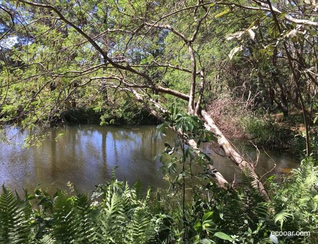 Foto mostra área com água cercado de árvores