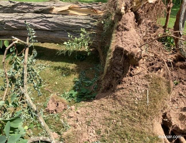 Foto mostra árvore caída e que ajuda a provocar gases de efeito estufa
