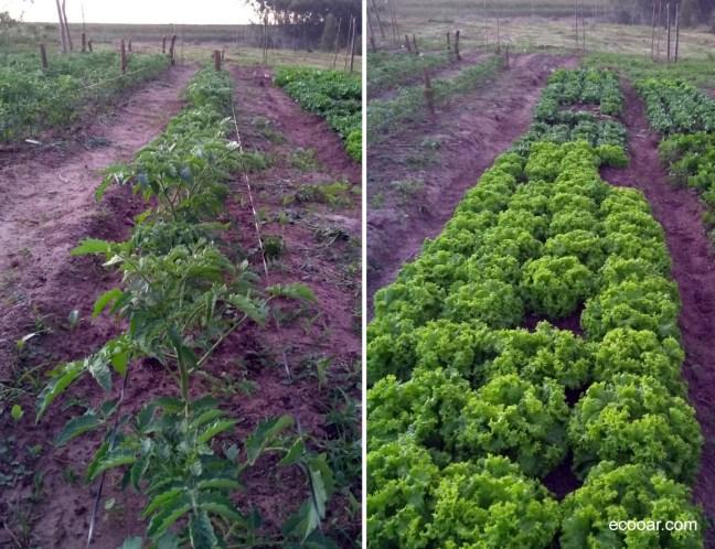 Foto mostra hortaliças alimentação ideal para quem é vegetariano