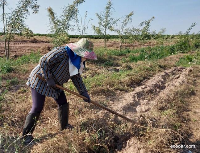 Foto mostra área de mulher limpando área para plantio de árvores da série A Sustentável Leveza do Ser