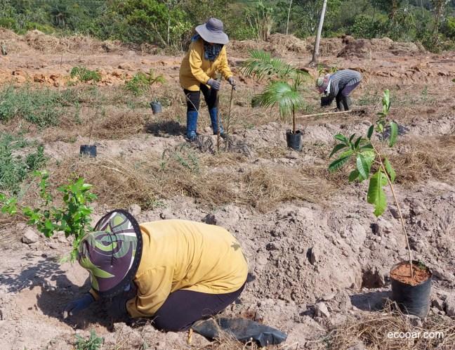 Foto mostra três mulheres plantando árvores da série A Sustentável Leveza do Ser