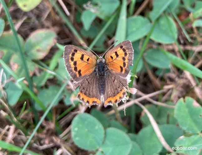 Foto mostra uma das borboleta na mata