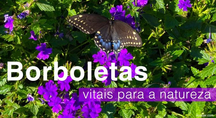Foto mostra uma das borboletas nativas americanas sobre vegetação e flores