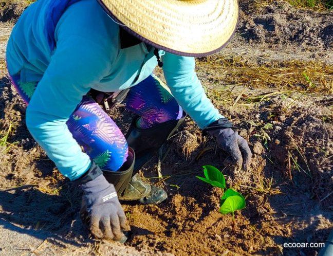 Foto mostra mulher plantando árvore que faz parte da ação de ESG