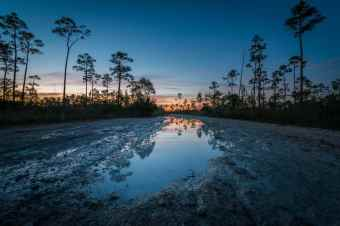 Everglades fills up with water after a rain