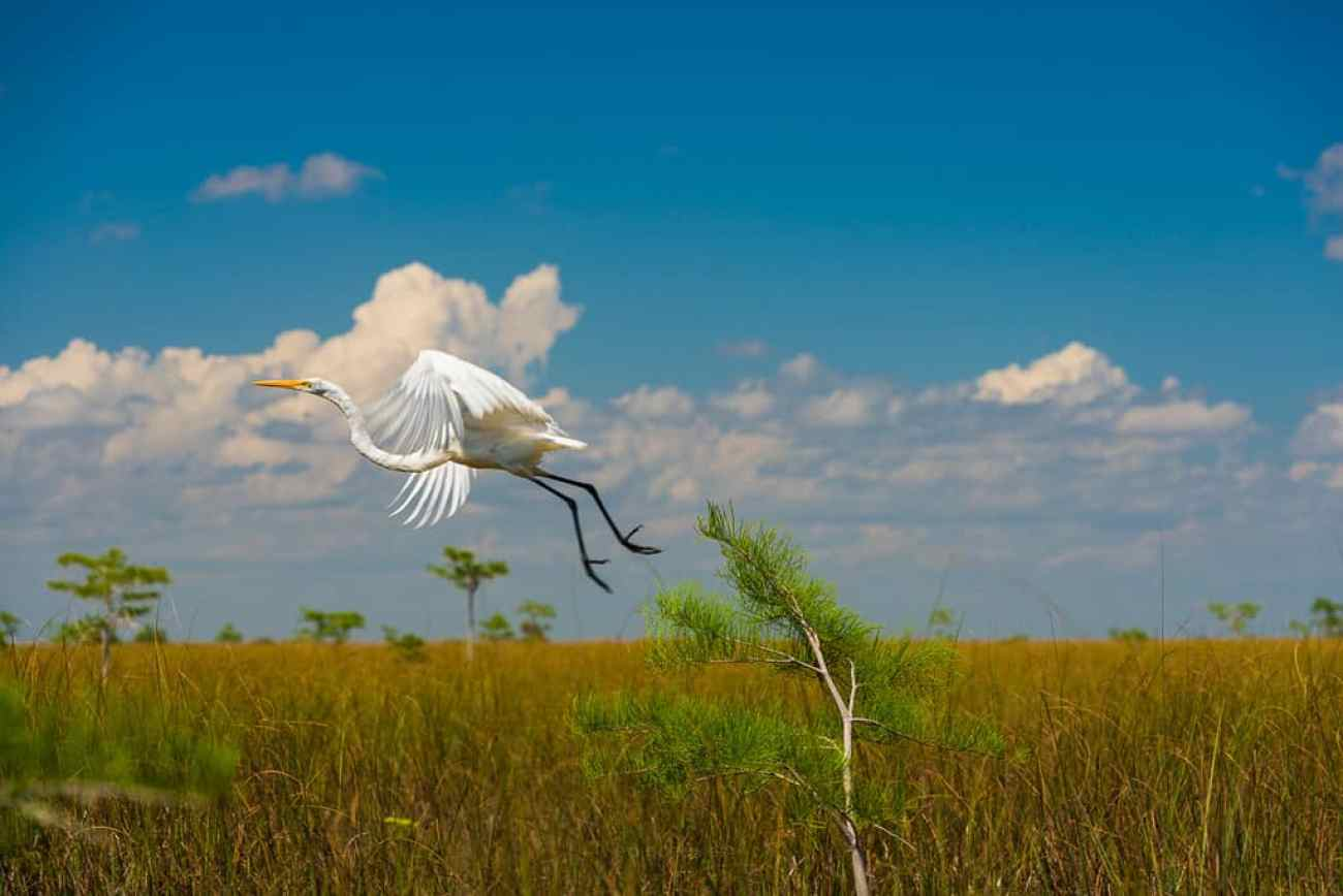 Everglades florida best photography spots