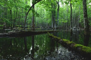 Cades Cove Swamp in Great Smoky Mountains National Park. Photograph by Tommy Blankenship, My Shot