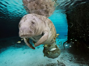 Photograph by Brian Skerry