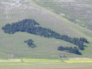This pine grove in Castelluccio di Norcia has been landscaped into the shape of Italy.Photograph by Peter Zagar