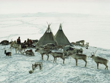Sami in Norway load supplies on reindeer sleds for their migration to Arnoy. Photograph by George F. Mobley