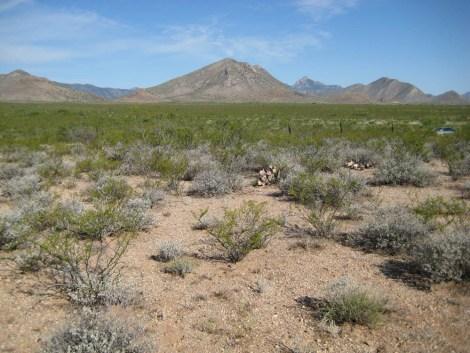 Photo of shrubs in a desert.