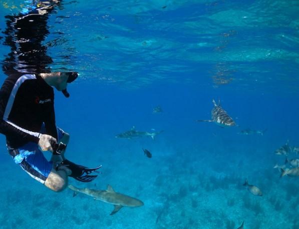 joe-grabowski-sharks