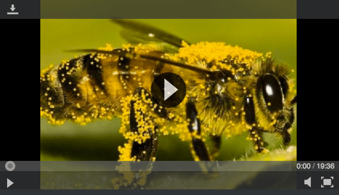 bee-video.png