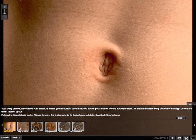 bellybutton.png