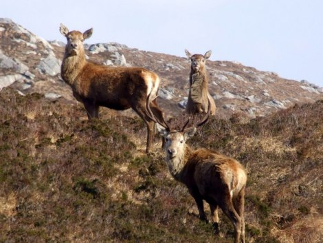 Oh, deer! Where did your ancestors come from? Photograph by Sylvia Duckworth, courtesy Wikimedia. CC-BY-SA-2.0