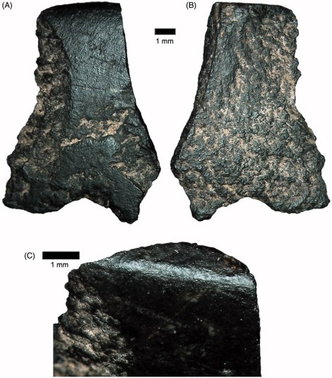 """This is the basalt flake identified as coming from the world's oldest ground-edge ax. The flake is actually quite small: 0.16 grams (0.009 ounce) in weight, 10.9 millimeters (.43 inch) long, 5.17 millimeters (.204 inch) wide, and 1.4 millimeters (.056 inch) thick. Photograph from """"World's earliest ground-edge axe production coincides with human colonisation of Australia."""" Peter Hiscock, Sue O'Connor, Jane Balme, Tim Maloney. Australian Archaeology Vol. 82, Iss. 1, 2016"""
