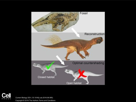 "We love this graphical abstract; it's basically a cheat sheet for the really readable article here. ""3D Camouflage in an Ornithischian Dinosaur."" Vinther, Jakob et al. Current Biology, volume 26, issue 18. CC-BY-4.0"