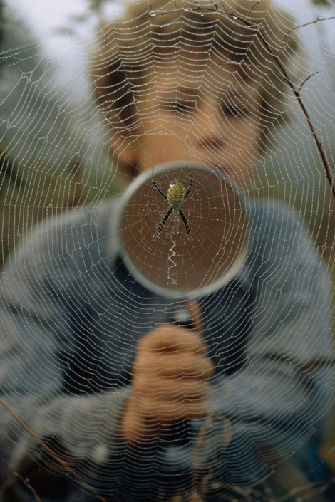 Much in same way that notes travel along a plucked guitar string, spider silk transmits vibrations in different frequencies, sending information back to the spider. Photograph by James L. Stanfield, National Geographic
