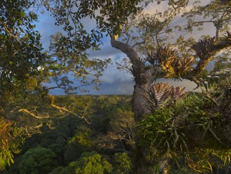 This gorgeous view is a vista in Yasuni National Park, Ecuador. Photograph by Steve Winter, National Geographic