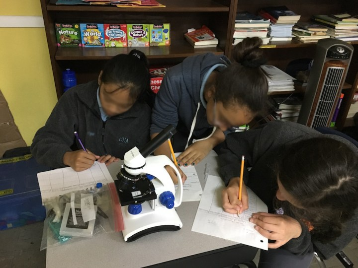 Students examine microorganisms
