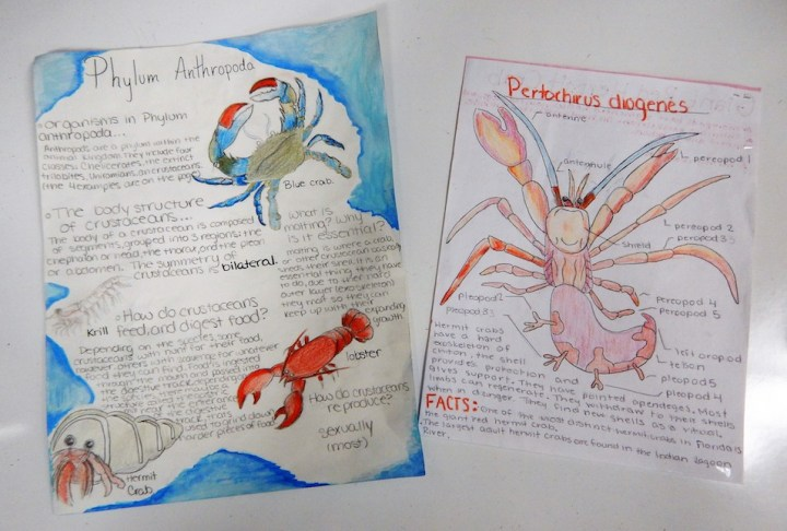 Arthropod one-pagers