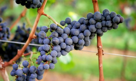 The Good Life: Best Wine Districts and Regions in Europe