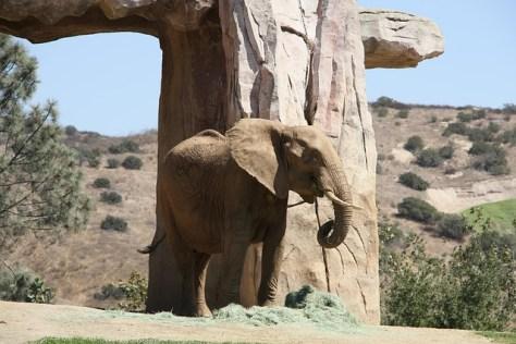 elephant-571415_640