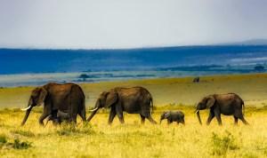 africa-1903017_1280