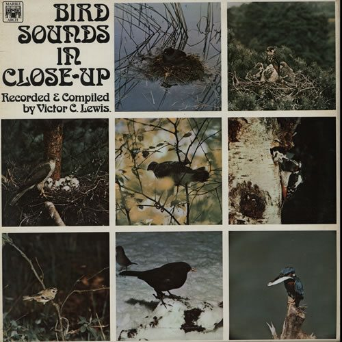 Various-Educational-Info-Bird-Sounds-In-Cl-632180