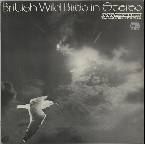 Various-Nature-Birds-Wha-British-Wild-Bird-632592