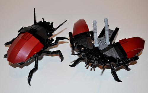 escarabajo_2