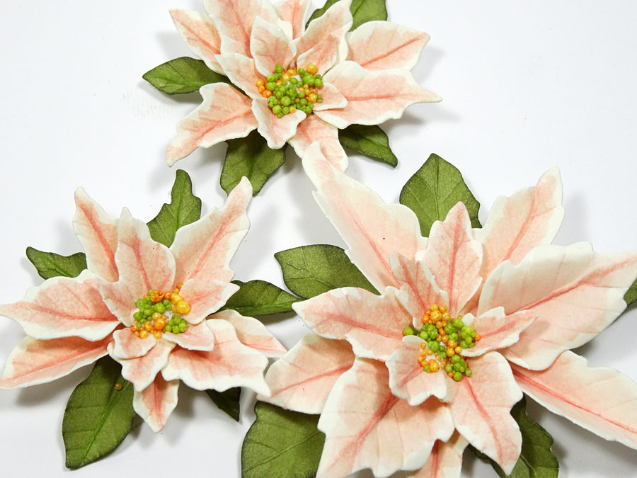 pink-poinsettia-tag-annette-green-15