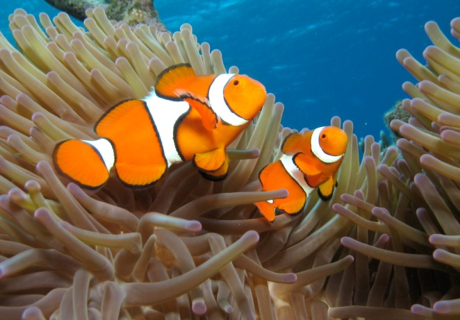 9. El padre de Nemo en realidad era la madre.