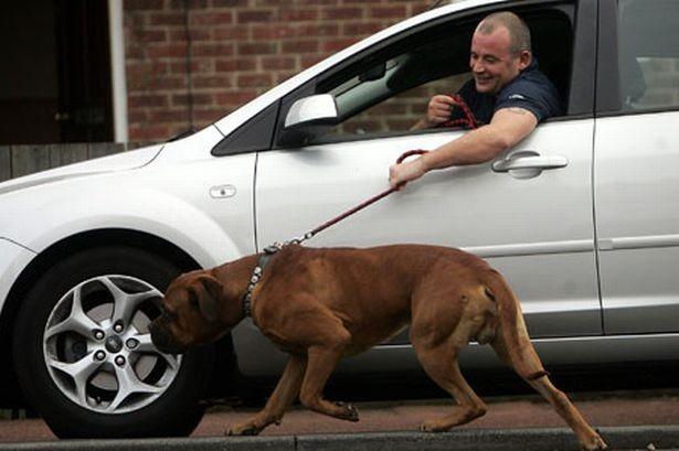 2. Porque sacar al perro una vez al día, es algo muy complicado.