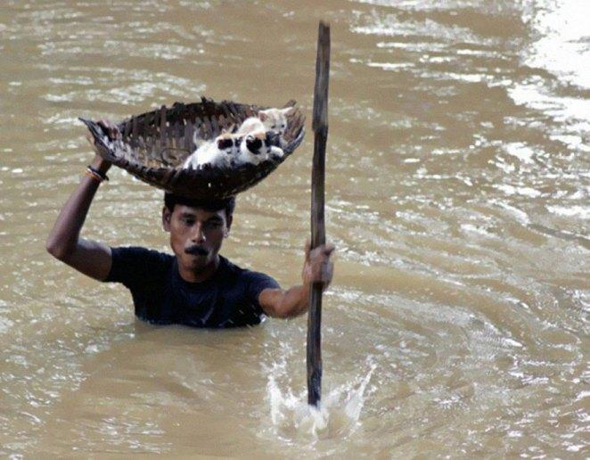 28. Durante las inundaciones masivas en Cuttack City, India, en 2011, un aldeano heroico salvó numerosos gatos callejeros manteniendo el equilibrio con una cesta sobre su cabeza.