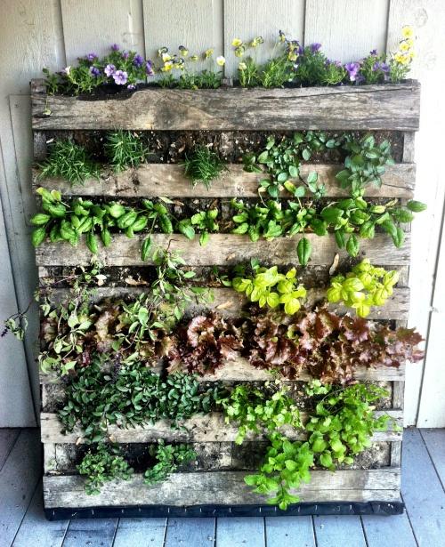 1. Reciclando un pallet podés tener diferentes tipos de plantas en un espacio reducido.