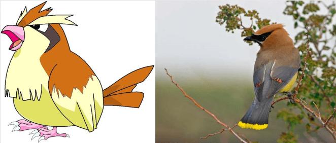10. Pidget - Bombycilla cedrorum