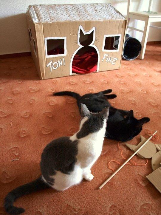 7. El dueño de Toni y Fine les quiso hacer una casa sencilla pero útil. Tiene muchas aberturas para que entren y salgan, también tiene una puerta con la silueta de un gato.