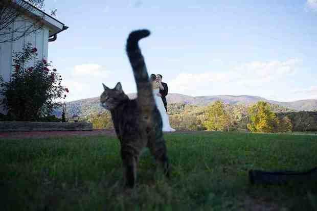 1. Miau, me importa un culo la foto de boda, miau.