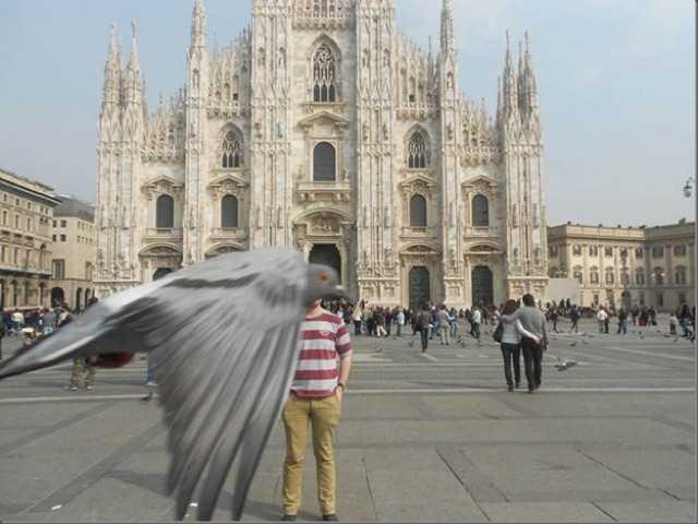 5. La paloma de la mala onda.