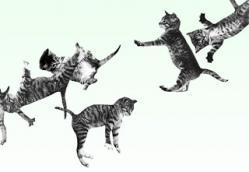 1. Los gatos que rebotan