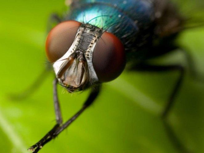 7. Por si las moscas