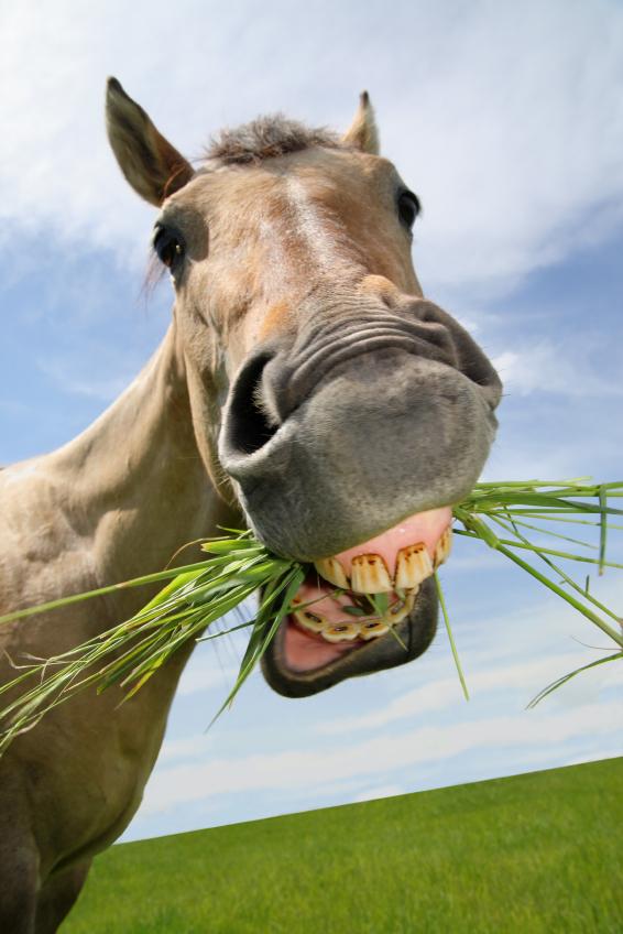 6. ¿Qué sabores prefieren los caballos?