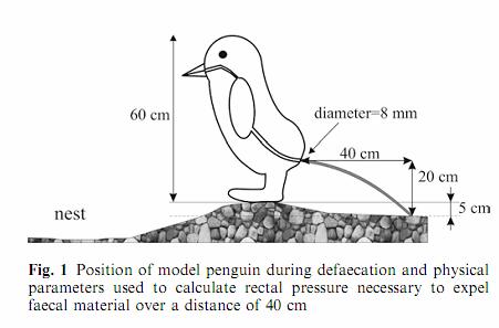 11. ¿A qué distancia pueden defecar los pingüinos?