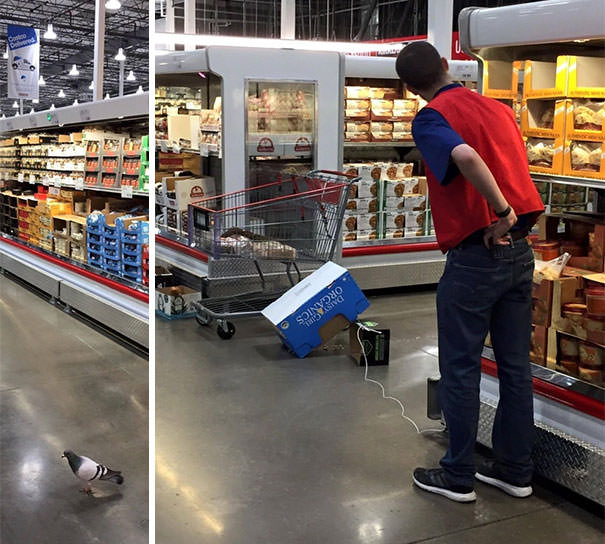 Costco Employee Silently Tries To Trap A Pigeon