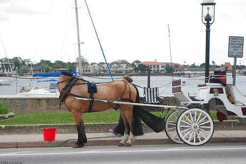 18. El increíble caballo sin cabeza
